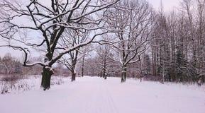 Paisaje del invierno en el parque Foto de archivo