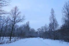 Paisaje del invierno en el parque Imagenes de archivo