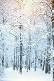 Paisaje del invierno en el parque de la ciudad, árboles de abedul en nieve Fotos de archivo