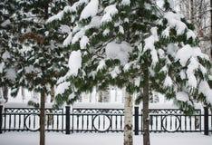 Paisaje del invierno en el parque del abedul Imagen de archivo