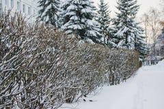 Paisaje del invierno en el parque del abedul Foto de archivo