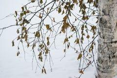 Paisaje del invierno en el parque del abedul Imágenes de archivo libres de regalías