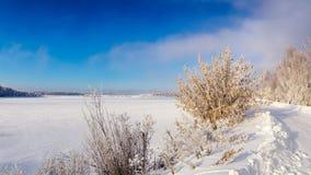 Paisaje del invierno en la orilla de un lago congelado con un árbol en helada, Rusia, Ural Fotos de archivo libres de regalías
