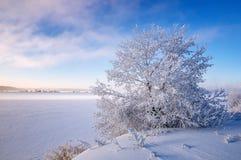 Paisaje del invierno en la orilla de un lago congelado con un árbol en helada, Rusia, Ural Imagen de archivo