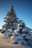 Paisaje del invierno en la puesta del sol Imagen de archivo