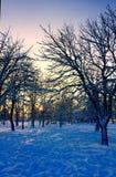 Paisaje del invierno en la puesta del sol Imagenes de archivo