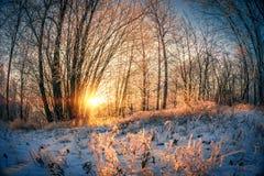 Paisaje del invierno en la puesta del sol Foto de archivo libre de regalías