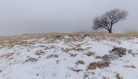 Paisaje del invierno en las montañas Imágenes de archivo libres de regalías