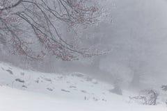 Paisaje del invierno en las montañas Fotos de archivo
