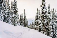 Paisaje del invierno en las montañas con los árboles nevados Fotos de archivo libres de regalías
