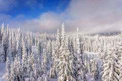 Paisaje del invierno en las montañas con los árboles nevados Imágenes de archivo libres de regalías