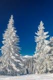 Paisaje del invierno en montañas con el abeto Fotografía de archivo