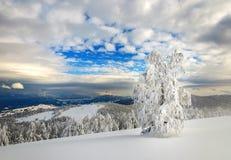 Paisaje del invierno en montañas con los abetos Imagen de archivo libre de regalías