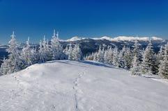 Paisaje del invierno en montañas con los abetos Imagenes de archivo