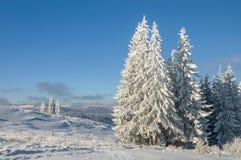 Paisaje del invierno en montañas con los abetos Fotos de archivo libres de regalías