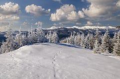 Paisaje del invierno en montañas con los abetos Imagen de archivo