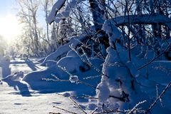 Paisaje del invierno en Noruega Fotos de archivo libres de regalías