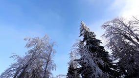 Paisaje del invierno en parque nevado metrajes