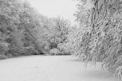 Paisaje del invierno en Praga Fotos de archivo