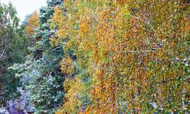 Paisaje del invierno en ramas melancólicas del abedul del día Imagen de archivo