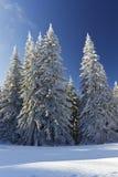 Paisaje del invierno en Rodopi mountain_4 Fotografía de archivo