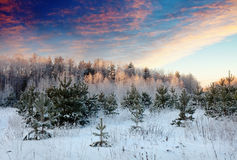 Paisaje del invierno en salida del sol Imágenes de archivo libres de regalías
