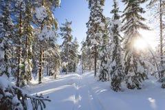 Paisaje del invierno en un día soleado foto de archivo libre de regalías