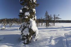 Paisaje del invierno en un día soleado foto de archivo