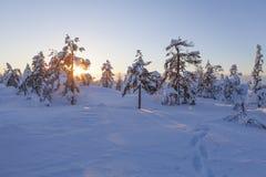 Paisaje del invierno en una puesta del sol fotografía de archivo