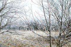 Paisaje del invierno - escarcha blanca imagenes de archivo