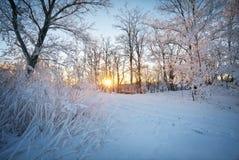 Paisaje del invierno Escarcha en árboles Foto de archivo libre de regalías