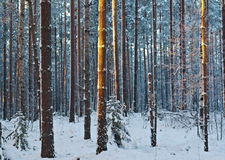 Paisaje del invierno Escena del invierno Foto de archivo