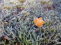 Paisaje del invierno Frost en la hoja amarilla caida Foto de archivo
