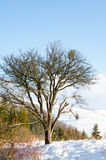 Paisaje del invierno, montañas coronadas de nieve, árboles en un fondo o Fotos de archivo libres de regalías