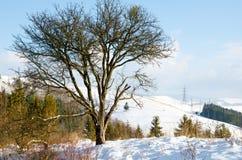 Paisaje del invierno, montañas coronadas de nieve, árboles en un fondo o Fotos de archivo