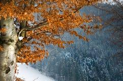 Paisaje del invierno, montañas de la nieve, árboles en un fondo del azul Foto de archivo libre de regalías