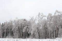 Paisaje del invierno Naturaleza rusa Foto de archivo
