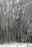 Paisaje del invierno Naturaleza rusa Fotos de archivo