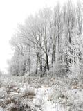 Paisaje del invierno Nevado Fotografía de archivo