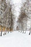 Paisaje del invierno Nevado de la ciudad La trayectoria en la nieve entre el abedul de los árboles Imagenes de archivo