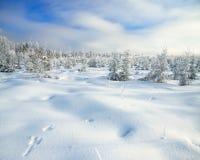 Paisaje del invierno del panorama con el bosque y los rastros de una liebre en s Imagen de archivo libre de regalías