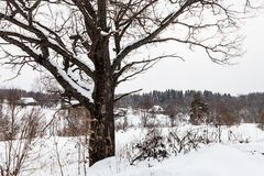 paisaje del invierno del pequeño pueblo ruso viejo Imagen de archivo
