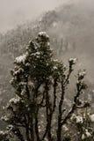 Paisaje del invierno Plantas del árbol y de la hierba seca en la nieve La nieve caped la cordillera en fondo borroso fotografía de archivo