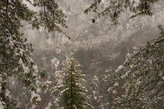 Paisaje del invierno Plantas del ?rbol y de la hierba seca en la nieve La nieve caped la cordillera en fondo borroso fotos de archivo