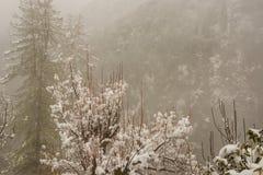 Paisaje del invierno Plantas del ?rbol y de la hierba seca en la nieve La nieve caped la cordillera en fondo borroso imagen de archivo libre de regalías