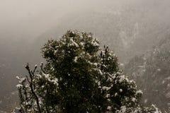 Paisaje del invierno Plantas del ?rbol y de la hierba seca en la nieve La nieve caped la cordillera en fondo borroso fotografía de archivo libre de regalías