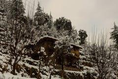 Paisaje del invierno Plantas del ?rbol y de la hierba seca en la nieve La nieve caped la cordillera en fondo borroso foto de archivo libre de regalías