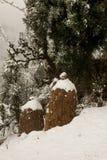 Paisaje del invierno Plantas del ?rbol y de la hierba seca en la nieve La nieve caped la cordillera en fondo borroso imágenes de archivo libres de regalías