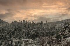 Paisaje del invierno Plantas del ?rbol y de la hierba seca en la nieve La nieve caped la cordillera en fondo borroso fotos de archivo libres de regalías