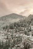 Paisaje del invierno Plantas del ?rbol y de la hierba seca en la nieve La nieve caped la cordillera en fondo borroso fotografía de archivo